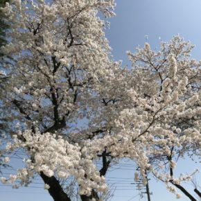 平成30年度 渋川市住宅リフォーム補助金