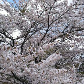 令和2年度渋川市住宅リフォーム促進事業補助金のご案内