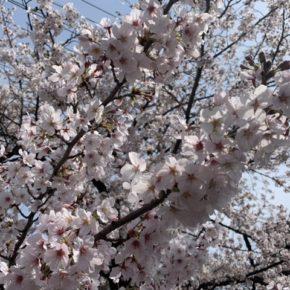 令和3年度 渋川市住宅リフォーム促進事業補助金のご案内